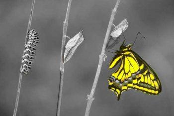 אילוסטרציה: שינוי
