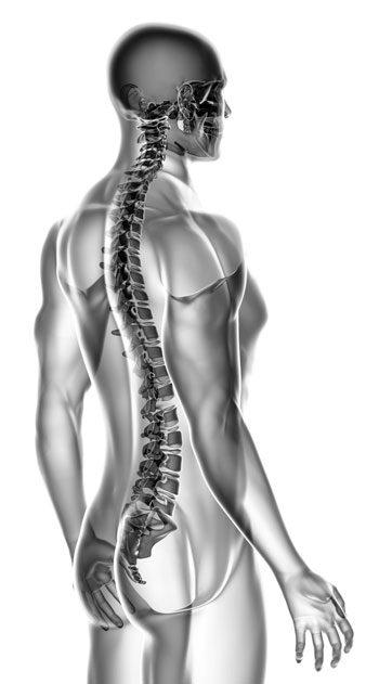 Illustration of a human backbone